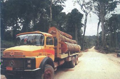 Amazonės miškų kirtimas